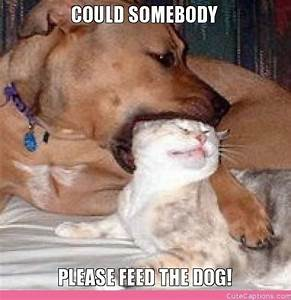 cute dog and cat pictures with captions - DriverLayer ...