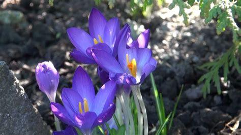 Blumen Im Garten 10 März 2013 Youtube