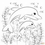 Coloring Dolphin Dolphins Printable sketch template