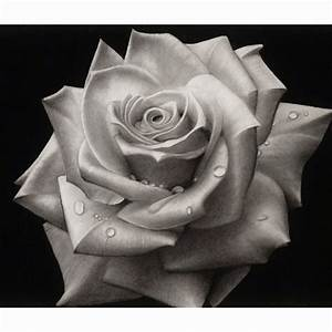 Black and white rose #art #drawing #sketch #pencil   Art ...