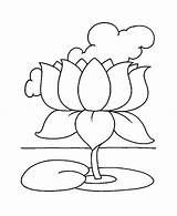 Flower Coloring Lotus Magnolia Drawing Pages Outline Sheet National Getdrawings Easy Printable Getcolorings Buddhism Spring Google sketch template