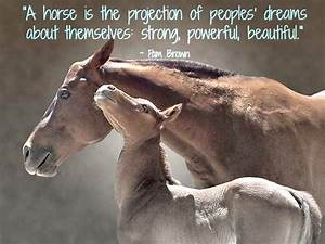 horse quotes �... Free Horses Quotes