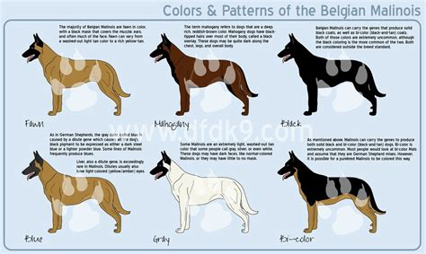 german shepherd color chart belgian malinois colors by mausergirl on deviantart