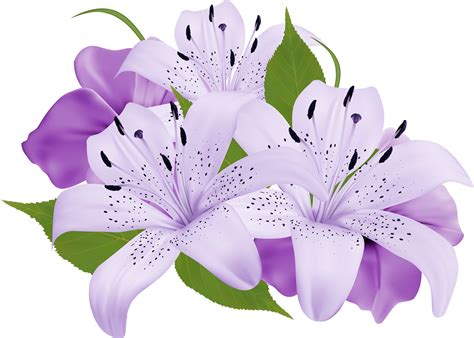 purple lilies images purple lily clipart clipground