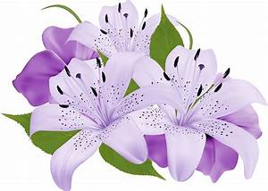 Purple lily clipart - Clipground