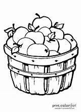 Apples Barrel Coloring Print Fun sketch template