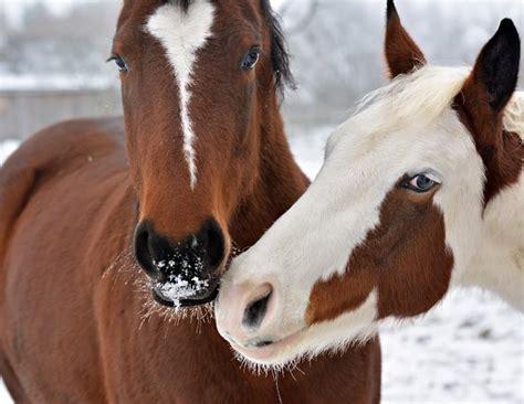 winter management   outdoor horse horse journals