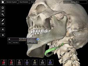 Hyoid Bone | Skeletal System | Pinterest | Bone jewelry