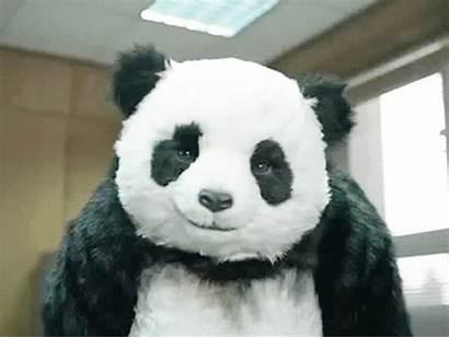 Panda Google Say Stare Never Hoppip Gifs