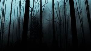 Night, Forest, Wallpapers, Hd, Download, Free