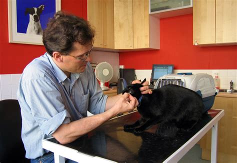 how to de stress you cat how to de stress veterinary visits for your cat