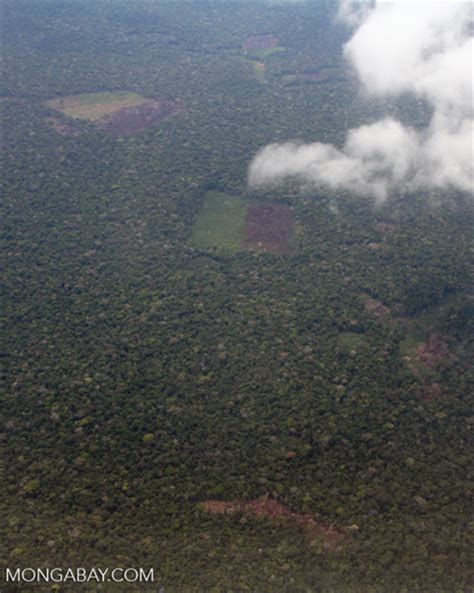 aerial view  burning rain forest