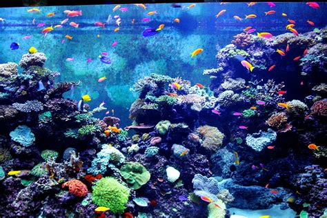 colorful aquarium fish free photo colorful aquarium fish fishes free image