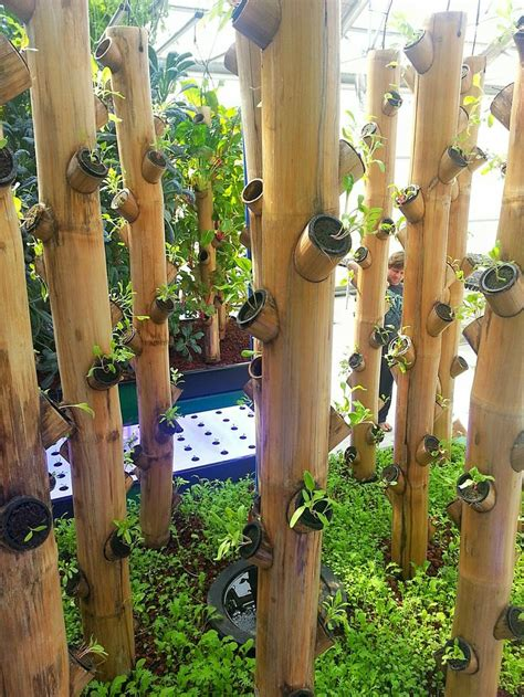 Vertical Garden Aquaponics by Newly Planted Bamboo Vertical Garden Aquaponics Greenhouse