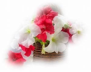 Pot De Fleur Transparent : mes tubes fleurs pots ou vases ~ Teatrodelosmanantiales.com Idées de Décoration