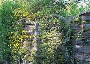 Welche Pflanzen Als Sichtschutz : sichtschutz pflanzen schmal kollektion ideen garten design als inspiration mit beispielen von ~ Whattoseeinmadrid.com Haus und Dekorationen