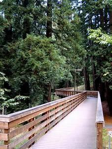 File:Bridge across ravine at UCSC.jpg - Wikimedia Commons