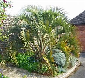 Azusa Light And Water Hours Pindo Jelly Palms Garden View Landscape Nursery Pools
