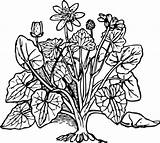 Clipart Bush Outline Clip Shrubs Plants Library Cliparts sketch template