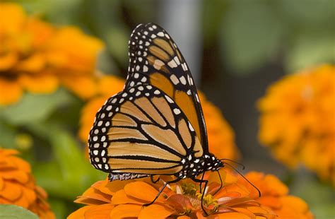 butterfly business consulting empowering