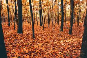 Best, Destinations, To, See, Autumn, Leaves