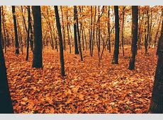 Best destinations to see Autumn Leaves The Brothers' blog