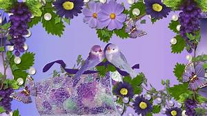 Beautiful Wallpapers Of Love Birds 1989742 Most - Litle Pups