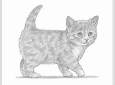 How To Draw A Kitten Cute Kittens Litle Pups