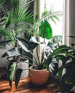 Dekorative Pflanzen Fürs Wohnzimmer : pflanzen f r wohnzimmer pflanzen f rs wohnzimmer deko pflanzen wohnzimmer inspirierend ~ Eleganceandgraceweddings.com Haus und Dekorationen