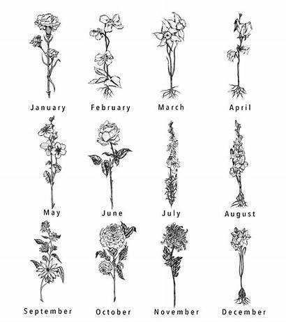 Tattoo Flower Birth Tattoos Carnation Designs Simple