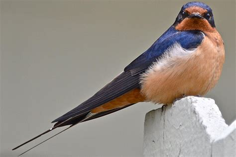 updated bathroom ideas easy tips to attract swallows swifts and martins