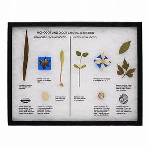 Monocots And Dicots Display  507b     Nature Watch