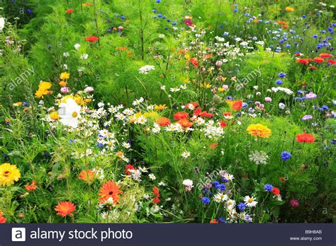 Blumen Auf Der Wiese by Meadow Wildflower Meadow Flower Meadow Summer Meadow