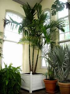 Neanthe Bella Palm: Prune very carefully as there is only ...