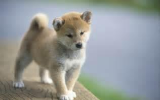 子犬:... 子犬の画像まとめ【いぬ・イヌ