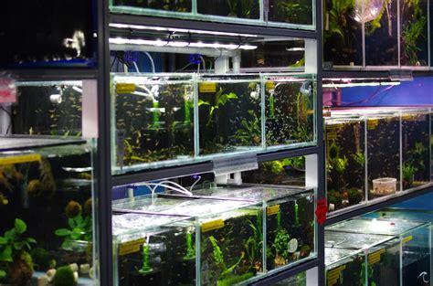 aquatic shop for aquariums fish tanks marine tropical freshwater coral frags
