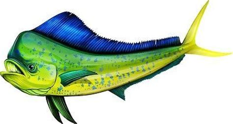mahi mahi salt water sea fish  wall sticker kids