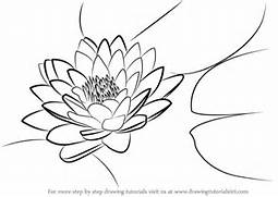 Gallery for  How To Draw A Lily Pad Flower Step By Step