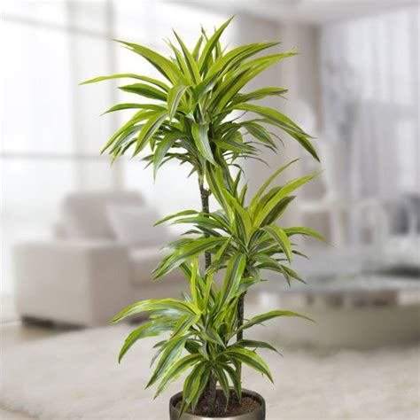 best plants for bathroom best plants for the bathroom indoor gardener