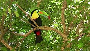 Hd Colorful Toucan Stock Footage Video | Getty Images