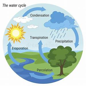 Water Cycle Colour Stock Vector  Illustration Of Graphic