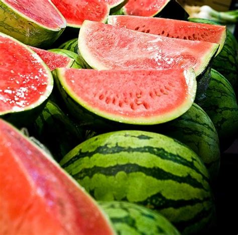 Watermelon Planting, Growing, And Harvesting Watermelons