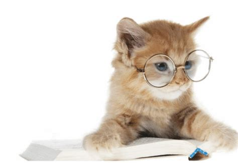 cat with glasses black cats with glasses 22 pictures for true cat