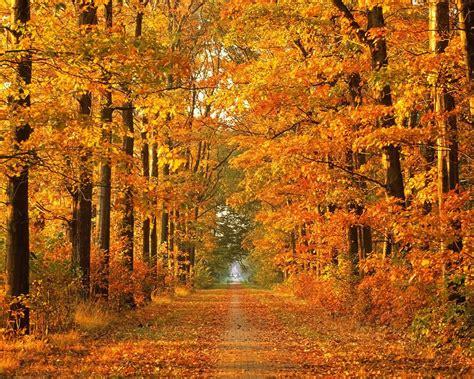 The Singing Gardener Autumn Leaves