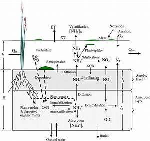 Nitrogen Processes In Wetlands  Water Column  Aerobic Soil Layer  And