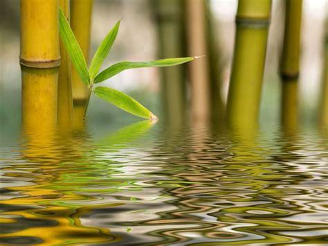 bamboo and water zen spa pinterest