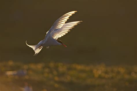 Master Backlighting In Wildlife Photography Nature Ttl