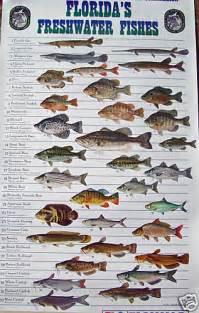 Florida Freshwater Fish Identification Chart