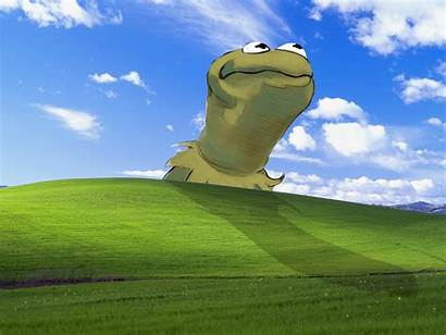 Frog Kermit Microsoft Windows Xp Muppet Bliss