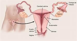 Si Usted Tiene C U00e1ncer De Endometrio